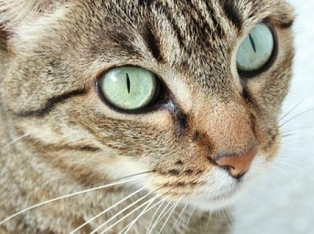 Le top des chat en entreprise
